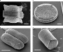 diatoms-sem