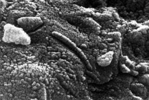 Possible Martian microfossils found in an meteorite in Antarctica, ALH84001