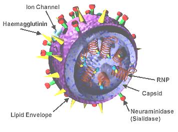 Influenza virus cutout. Credit: Wikimedia commons.
