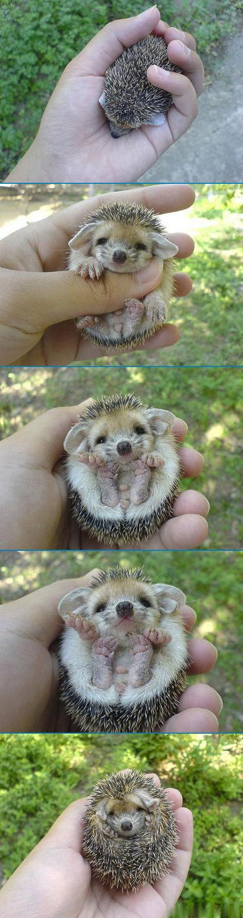 Cute little fella
