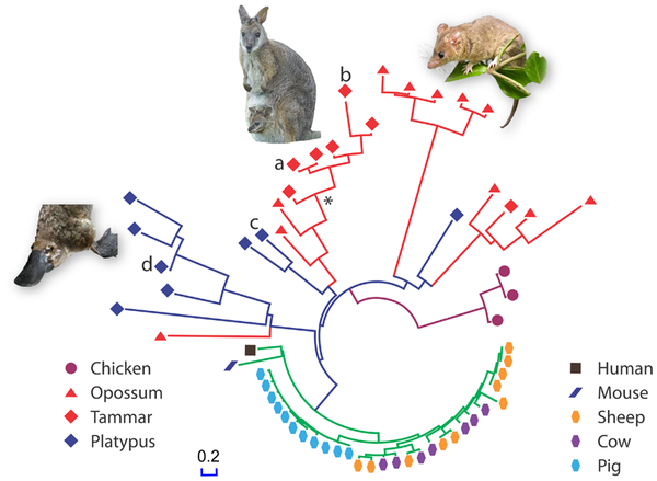 From Wang J,  et al. 2011 PLoS ONE 6(8): e24030. doi:10.1371/journal.pone.0024030