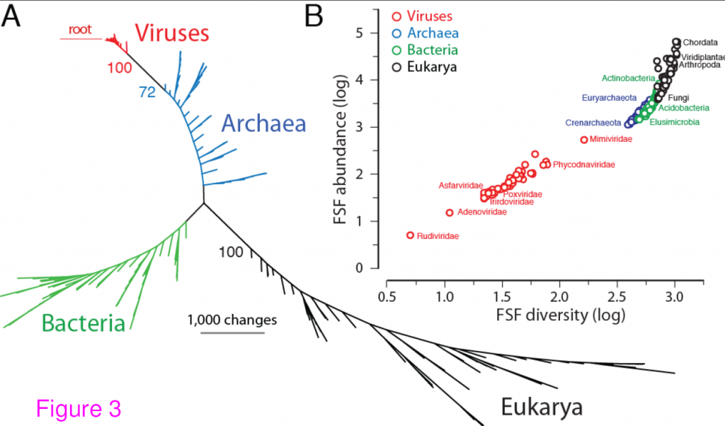 Universal tree of life (uToL) and proteomic diversity. A. One optimal (P < 0.01)most parsimonious phylogenomic tree describing the evolution of 200 proteomes (50 eachfrom Archaea, Bacteria, and Eukarya and viruses; virus families are listed in Table 2)generated using the census of abundance of 1,739 FSFs (1,517 parsimoniously informativesites; 62,061 steps; CI = 0.156; RI = 0.804; g1 = −0.325). Terminal leaves of Viruses (V),Archaea (A), Eukarya (E) and Bacteria (B) were labeled in red, blue, black and greenrespectively Numbers on the branches indicate bootstrap values. B. FSF diversity (number ofdistinct FSFs in a proteome) plotted against FSF abundance (total number of FSFs that areencoded) for 200 proteomes. Major families/phyla/kingdoms are labeled. Both axes are inlogarithmic scale.