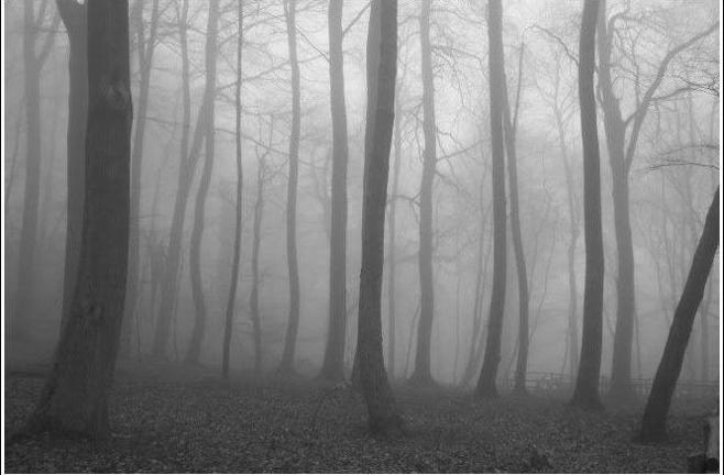 empty-woods