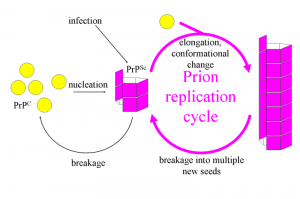 800px-Prion_Replication